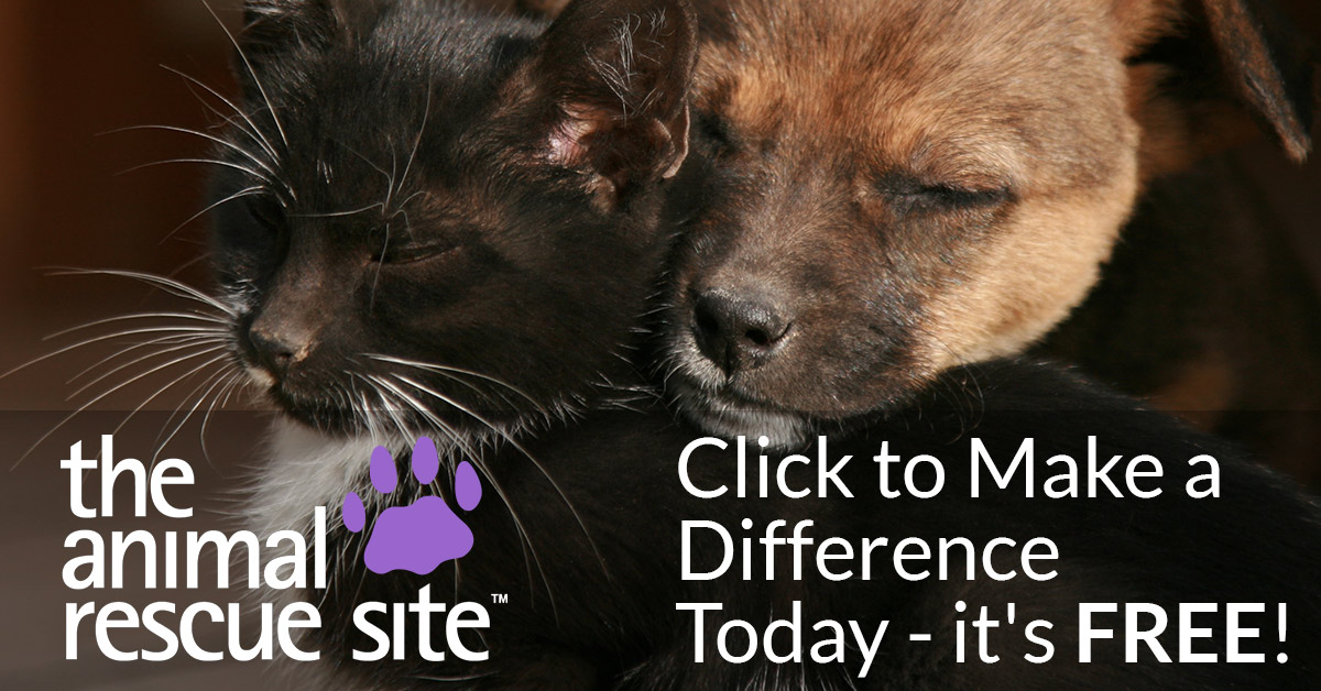 The Animal Rescue Site | Click to Feed Rescue Animals