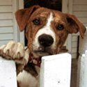 Give Foreclosure Pets a Helping Paw