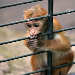 Testing Nicotine on Animals is Wrong! Stop the Experiments!