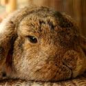Giorgio Armani Shows No Compassion for Small Creatures. Take Action!