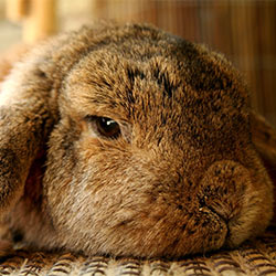 Tell Giorgio Armani to stop allowing innocent rabbits to be slaughtered for their fur.