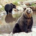 Put a Stop to Bear Bile Farming