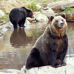 Don't allow Asiatic black bears to be captured and tortured for their bile. Take action!