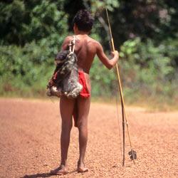 Urge Brazil's president to halt the construction of a destructive mega-dam in Brazil's Amazonian rainforest.