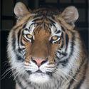 Protect Big Cats and Humans Alike!