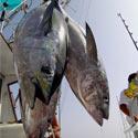 Save the Endangered Bluefin Tuna!