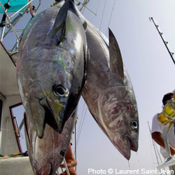 Overfishing and the Gulf Oil Spill have severely depleted the bluefin tuna population. Take action!