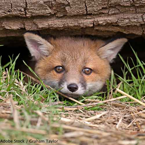 Urge Prime Minister May to uphold the fox hunting ban and force Andrea Leadsom's resignation as Environmental Secretary.