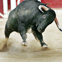Bullfighting is animal cruelty, not entertainment!