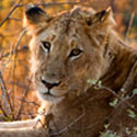 South Africa: No More Canned Hunts!