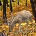 Tell Canada to Protect its Endangered Caribou