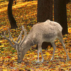 Canada's woodland caribou are becoming seriously endangered. Take action!