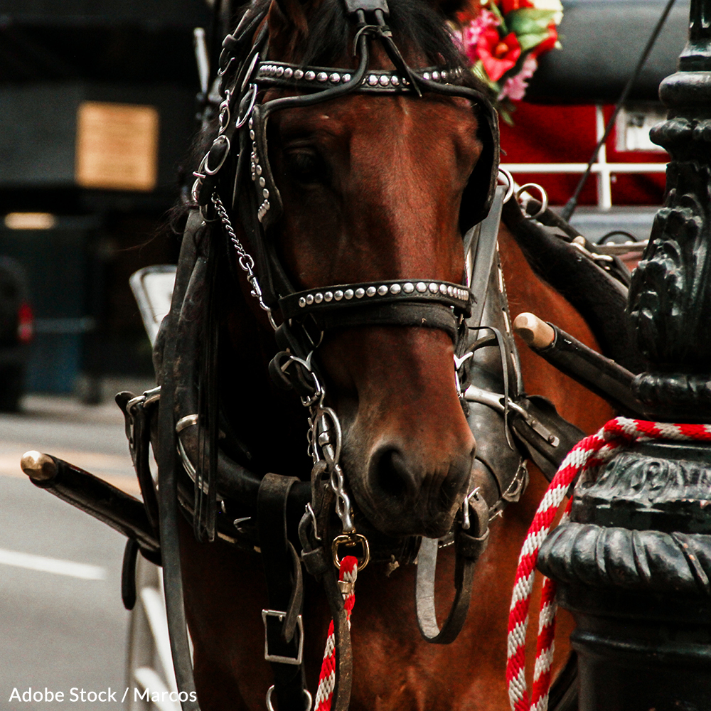 Don't let the destructive carriage horse industry harm any more innocent horses! Take action now!