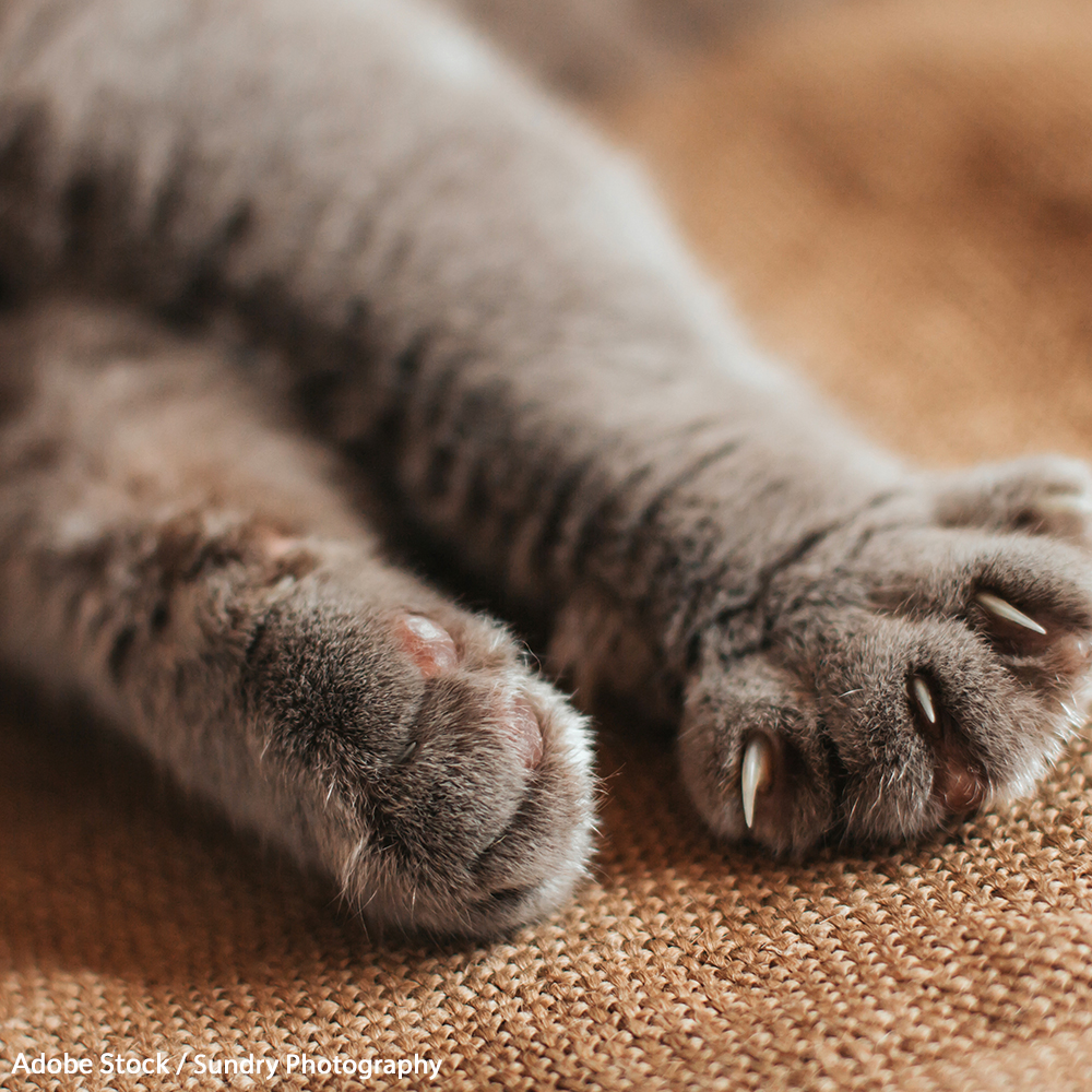 Save Cats From Cruel Declawing!