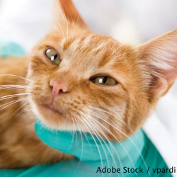 Urge the American Veterinary Medical Foundation To Change Their Policy On Declawing!