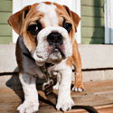Puppies for Profit: Stop Evil Commercial Breeding!