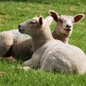 Don't Let Compound 1080 Harm Your Pet!