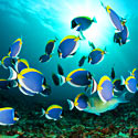 Stop Fish Collectors from Killing Coral Reef Wildlife!
