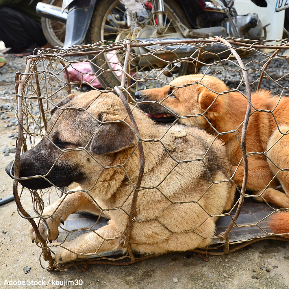 Tell Vietnam to Take Dogs Off the Menu!