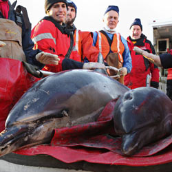 Don't allow Congress to cut funding from the dolphin stranding rescue in Cape Cod.