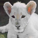 Help Protect Our Precious Exotic Animals!