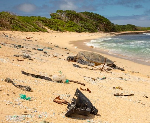 Ask the Governor of your state to ban single-use plastic bottles.