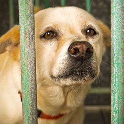 Gas chamber euthanasia is a barbaric practice that's still legal in most states. Take action now!