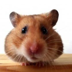 A pet store in Atlanta has been torturing and killing small animals. Take action!