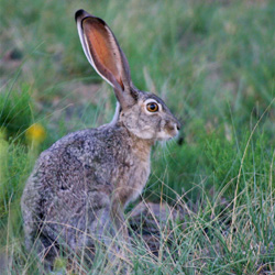 Hare coursing is cruel and inhumane, and causes needless death and injury to countless hares per year in Ireland. Take action!