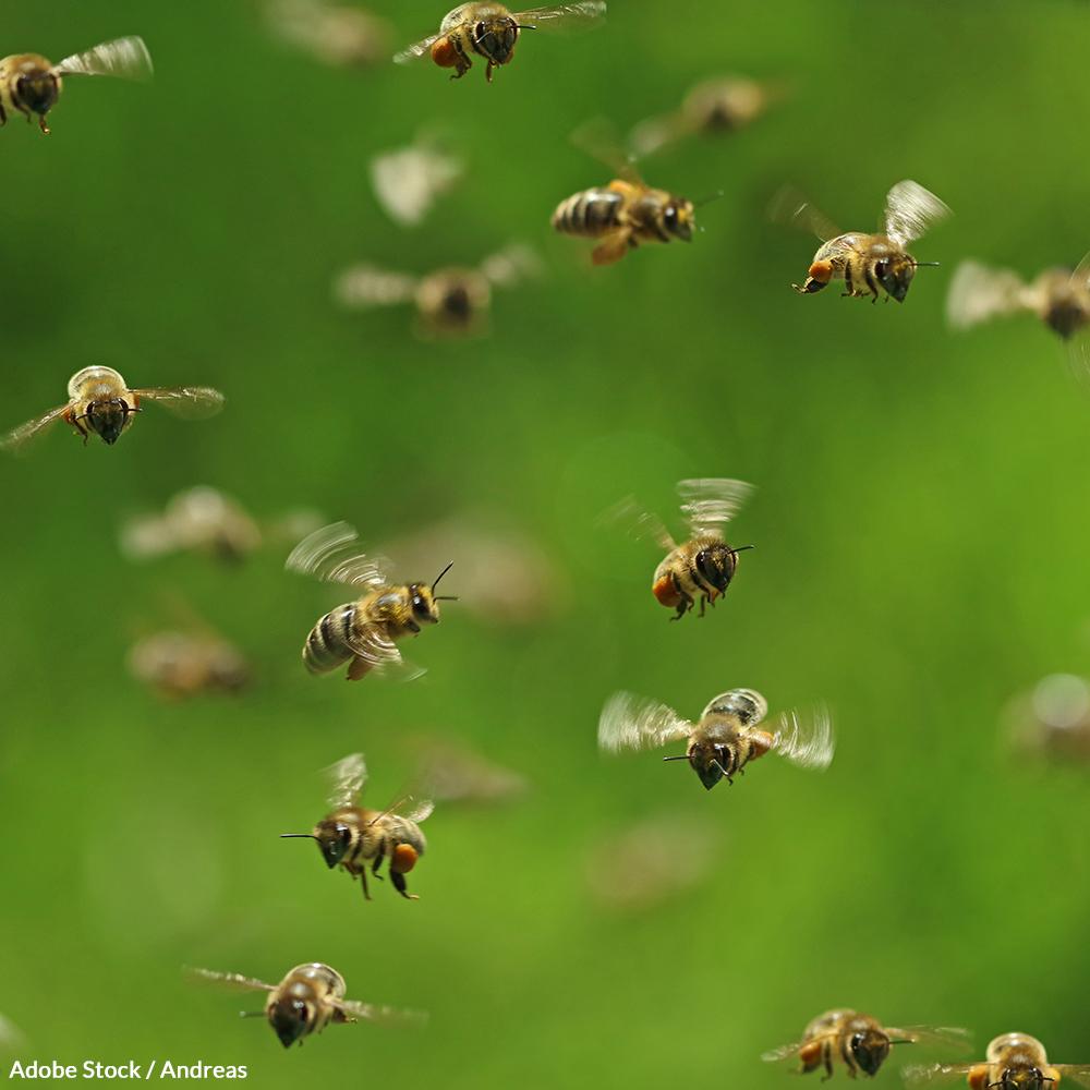 Protect Pollinators: Take the Honey Bee Pledge!