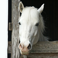 No one wants horse slaughter plants in America. Tell the USDA not to allow horses to be slaughtered for their meat in the US.
