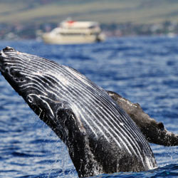 Urge Australia's environment minister to speak out for these majestic creatures.