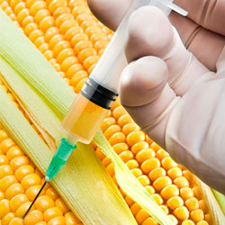 Tell the FDA commissioner to require genetically modified ingredients to be reflected in food package labels.