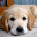 Tell Missouri: No More Puppy Mills!