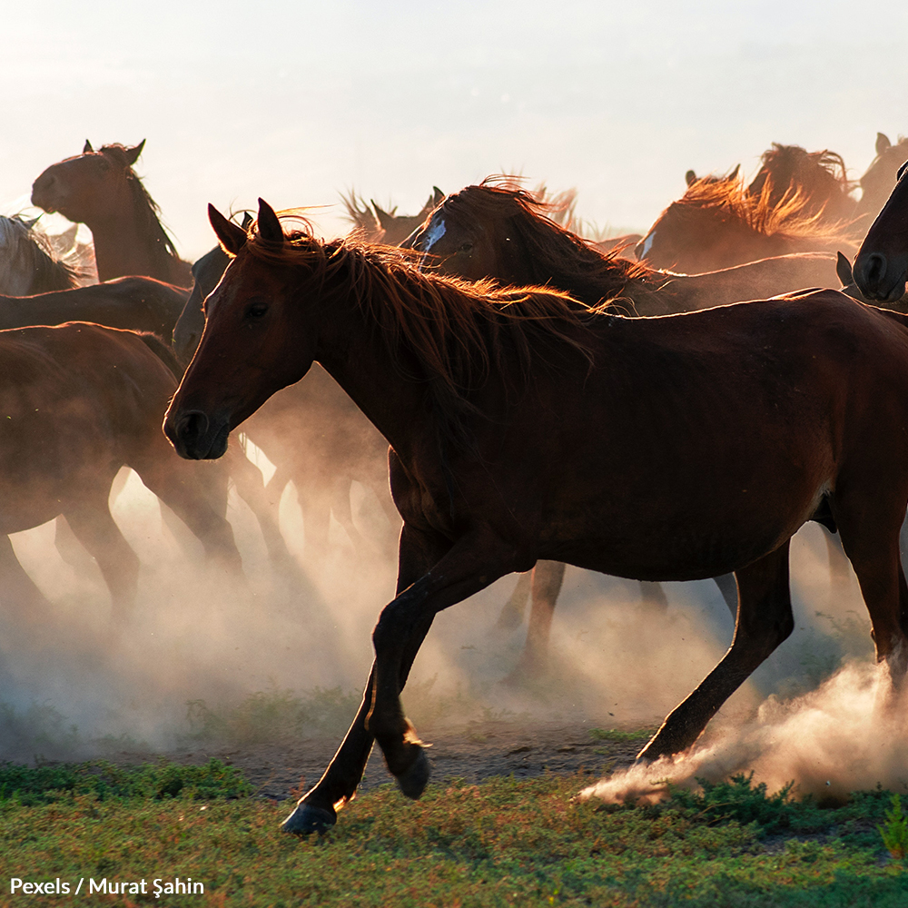 Take A Stand For Wild Horses