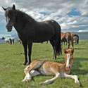 Stop Senseless Deaths in Mustang Roundups