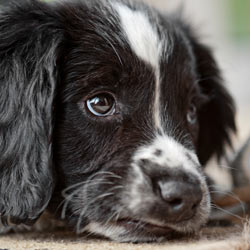 Urge North Dakota to adopt stricter animal protection legislation.