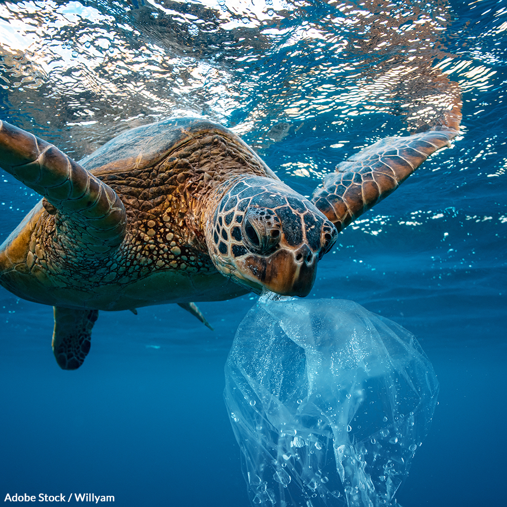 Take the Pledge to Keep our Oceans Clean