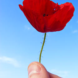 Show support to veterans who are victims of traumatic stress and sexual abuse.