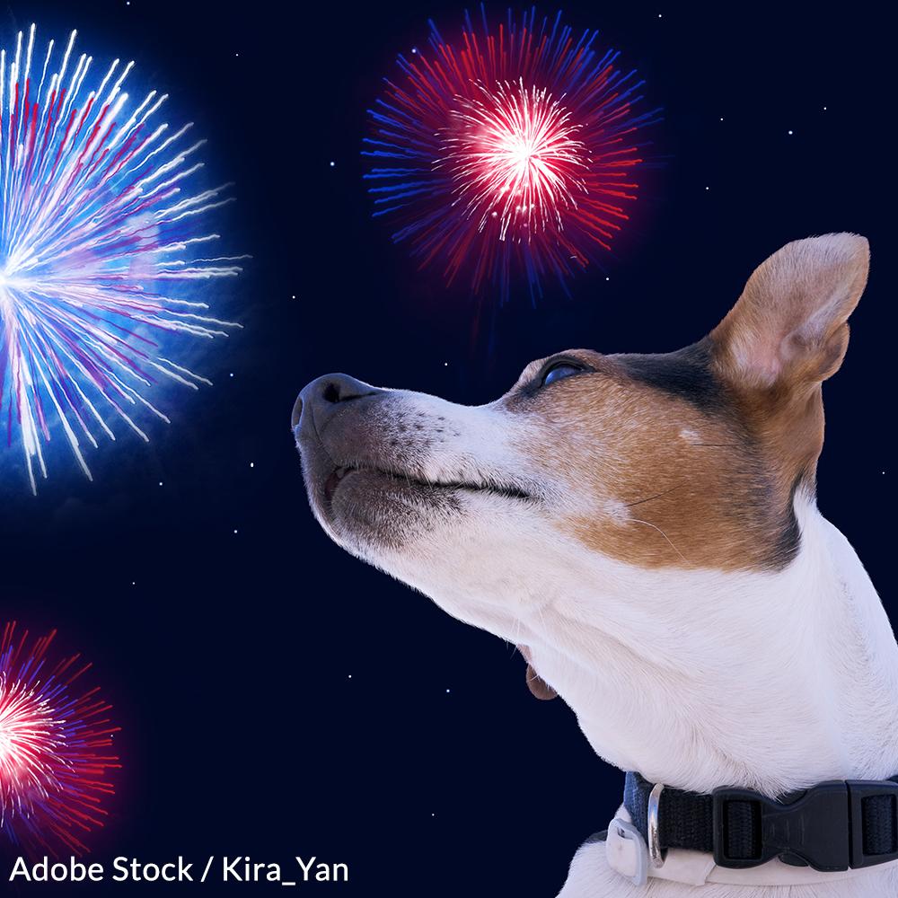 Take the Pet Friendly Fireworks Pledge!