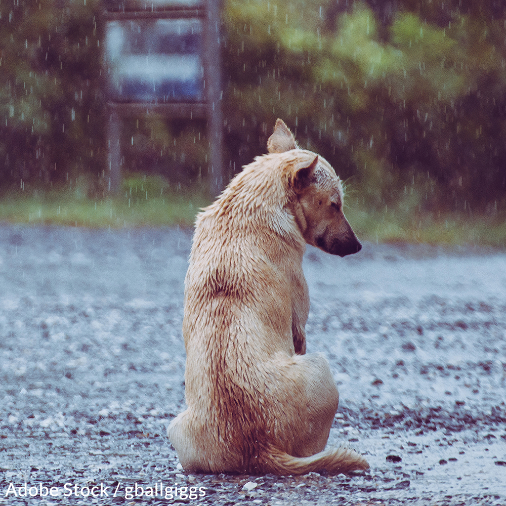 Pledge To Keep Your Pet Sheltered All Year Long
