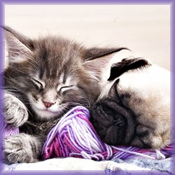 Protect. Cure. Love. Pledge To Share Pet Cancer Awareness!