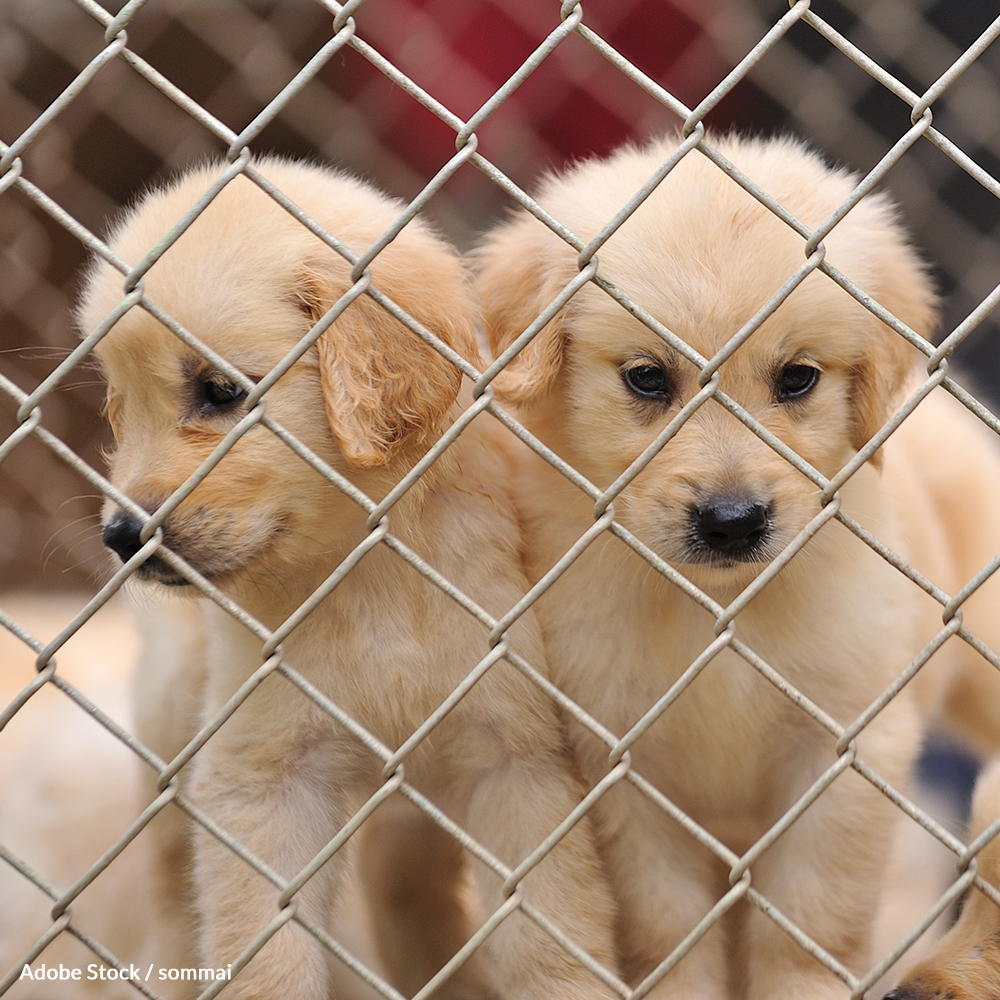 Pledge to Put Cruel Puppy Mills Out Of Business