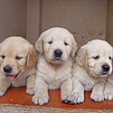 Putting Puppy Mills Out of Business, Once and for All: A Personal Pledge