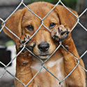 Ban Wire Cages That Hurt Puppy Paws!