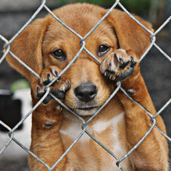 Ban the wire cages that hurt little puppy paws!