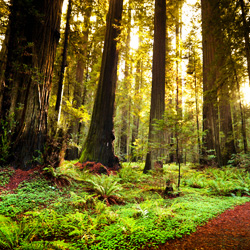 Sign the petition to save California's beautiful Richardson Grove.