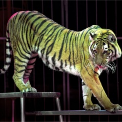 No More Animal Cruelty At Circuses