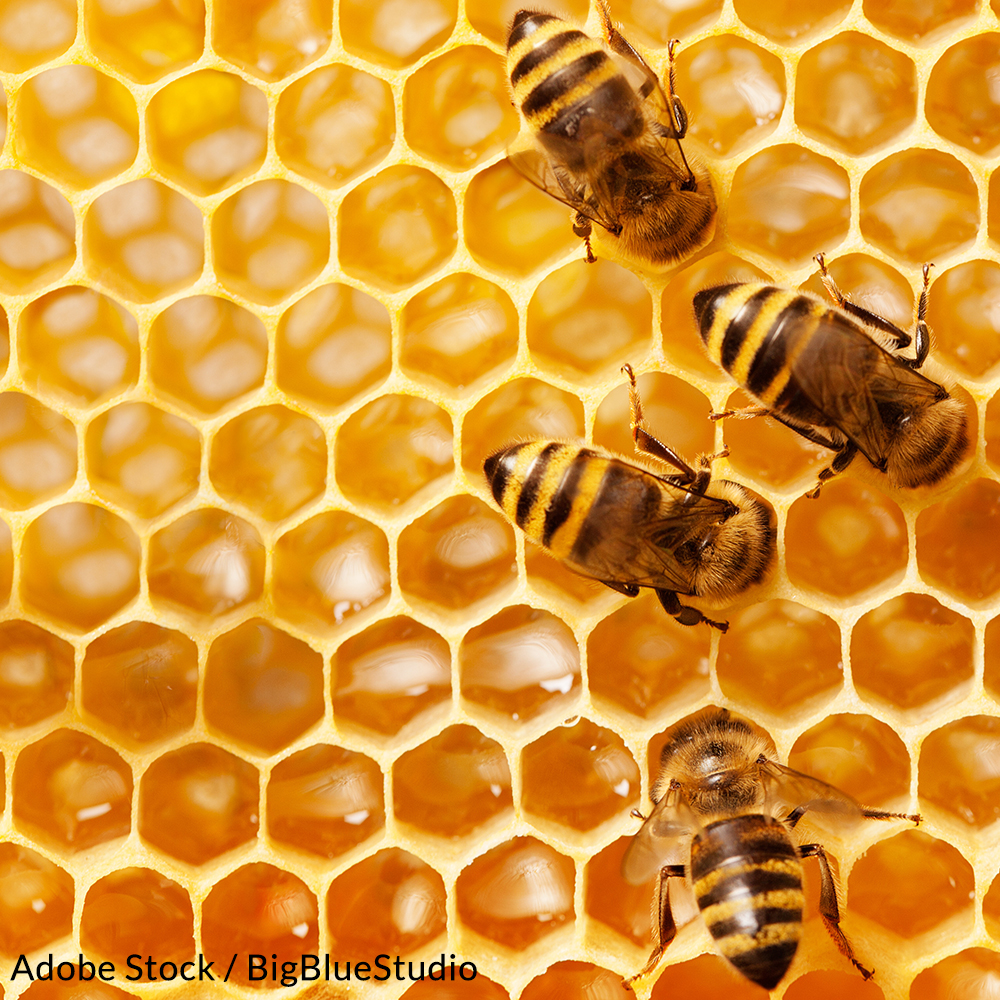 Protect Honeybees from these Dangerous Pesticides