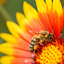 Urge the EPA to outlaw neonicotinoid pesticides that are killing off honey bees.